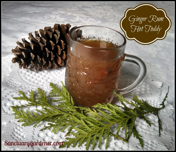 Ginger Rum Hot Toddy pic