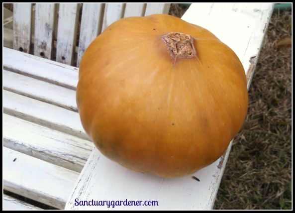 Seminole pumpkin