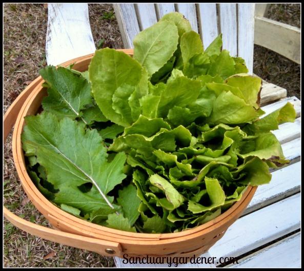 Turnips greens & escarole