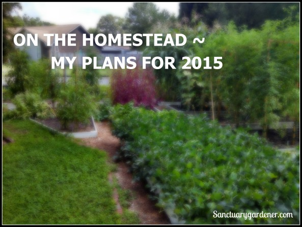Plans for 2015 pic