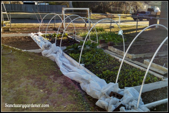 My side beds in January 2015 ~ closeup of the far end