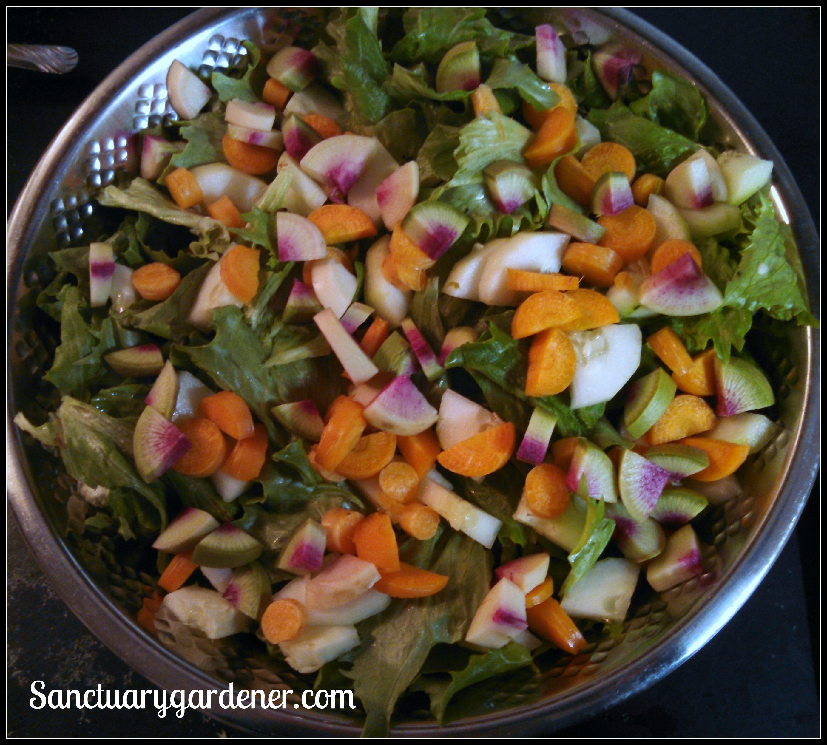 Sanctuary gardener update 1 26 15 sanctuary gardener - Salade reine des glaces ...