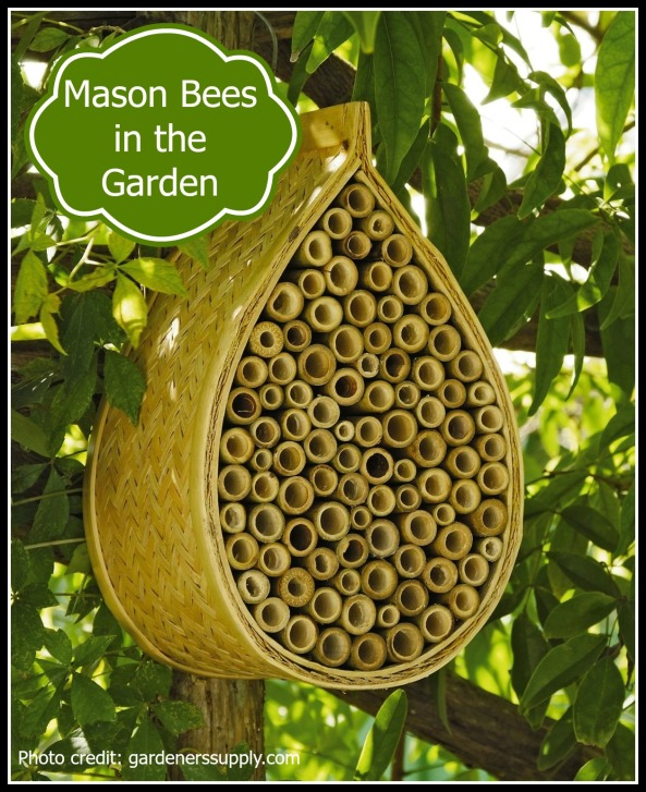 Mason Bees in the Garden pic