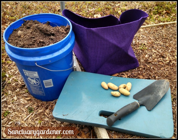 Ready to plant potatoes
