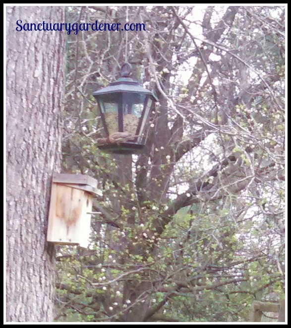Birds at my feeder