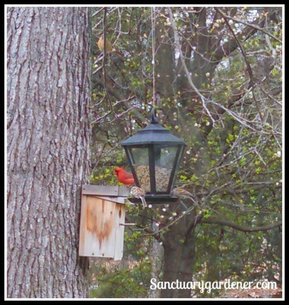 Bird feeder traffic