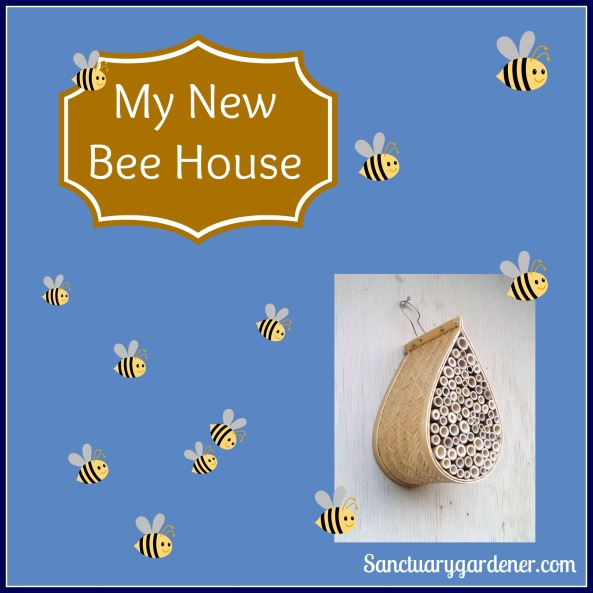 My New Bee House pic