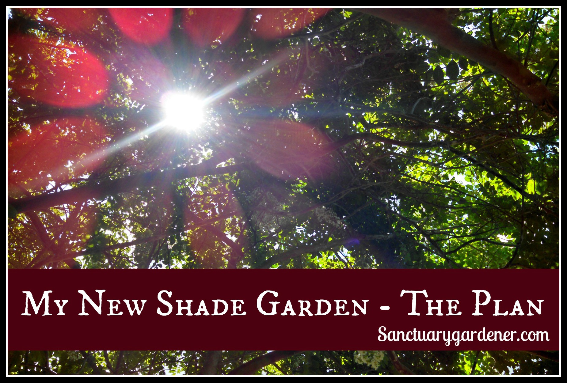 My New Shade Garden   The Plan Pic