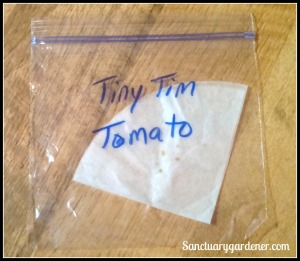 Soaked tomato seeds ready to germinate