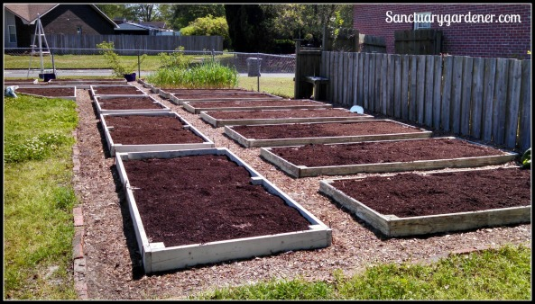 Beds weeded and prepped