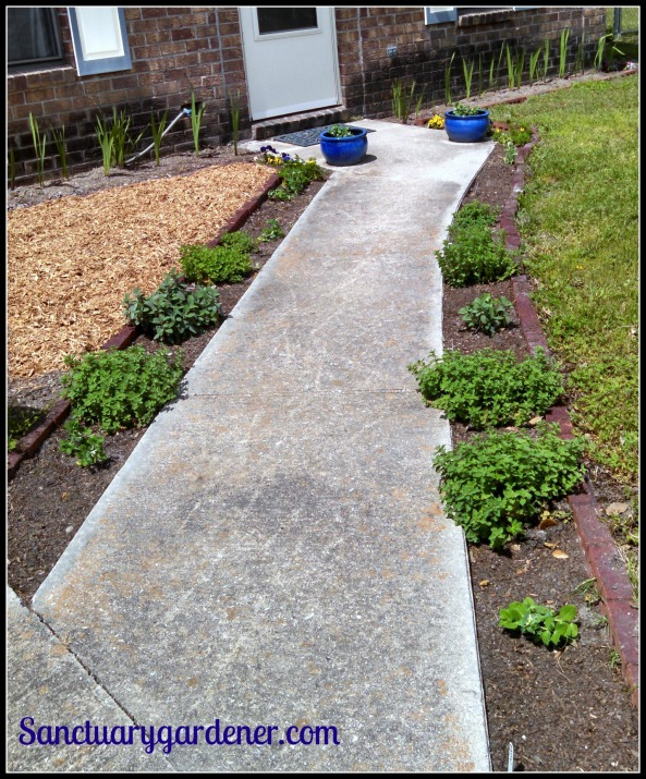 Front walkway, ready for spring