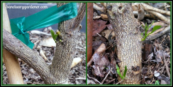 Key lime trees - new signs of life