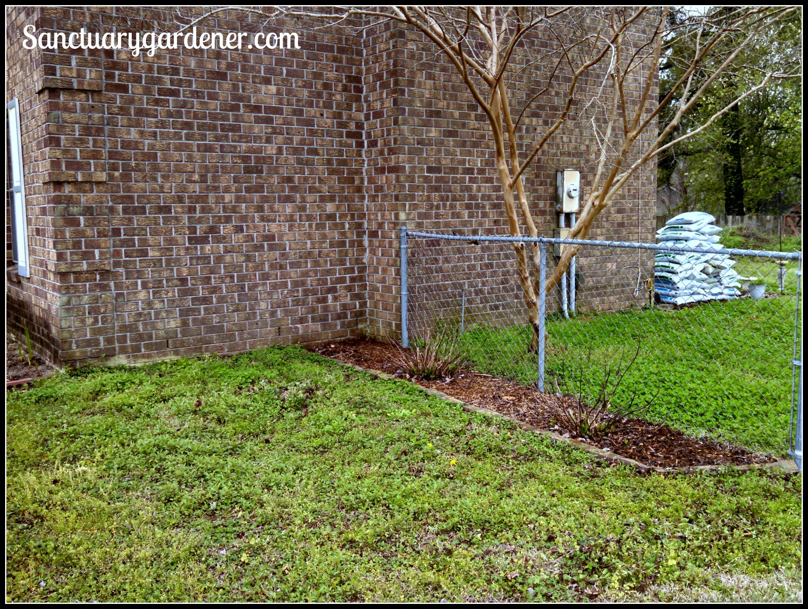 Landscaping The Side Of My House : My new shade garden the planting part sanctuary gardener