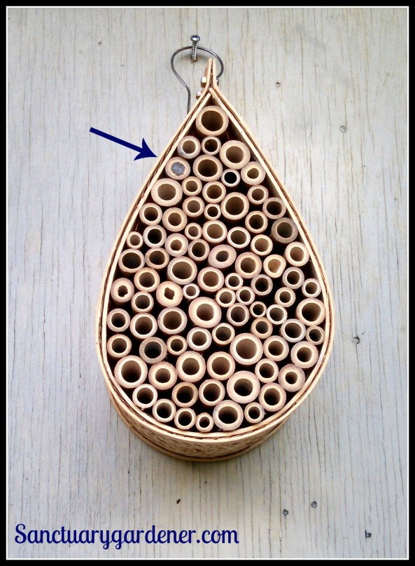 Mason bee house with one cell filled - an egg inside