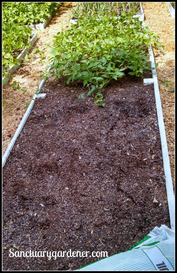 Bed 19 in May 2015 ~ Butter peas & fallow