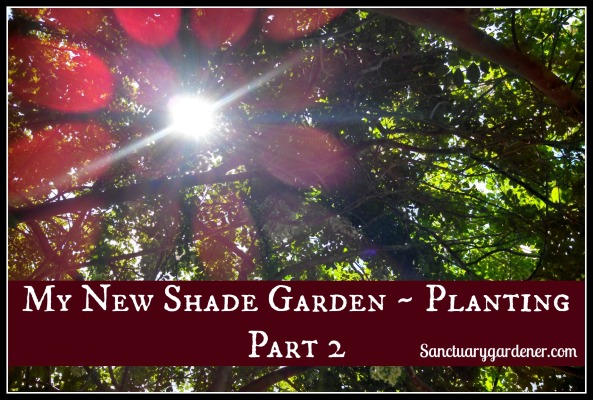 My new shade garden - planting part 2