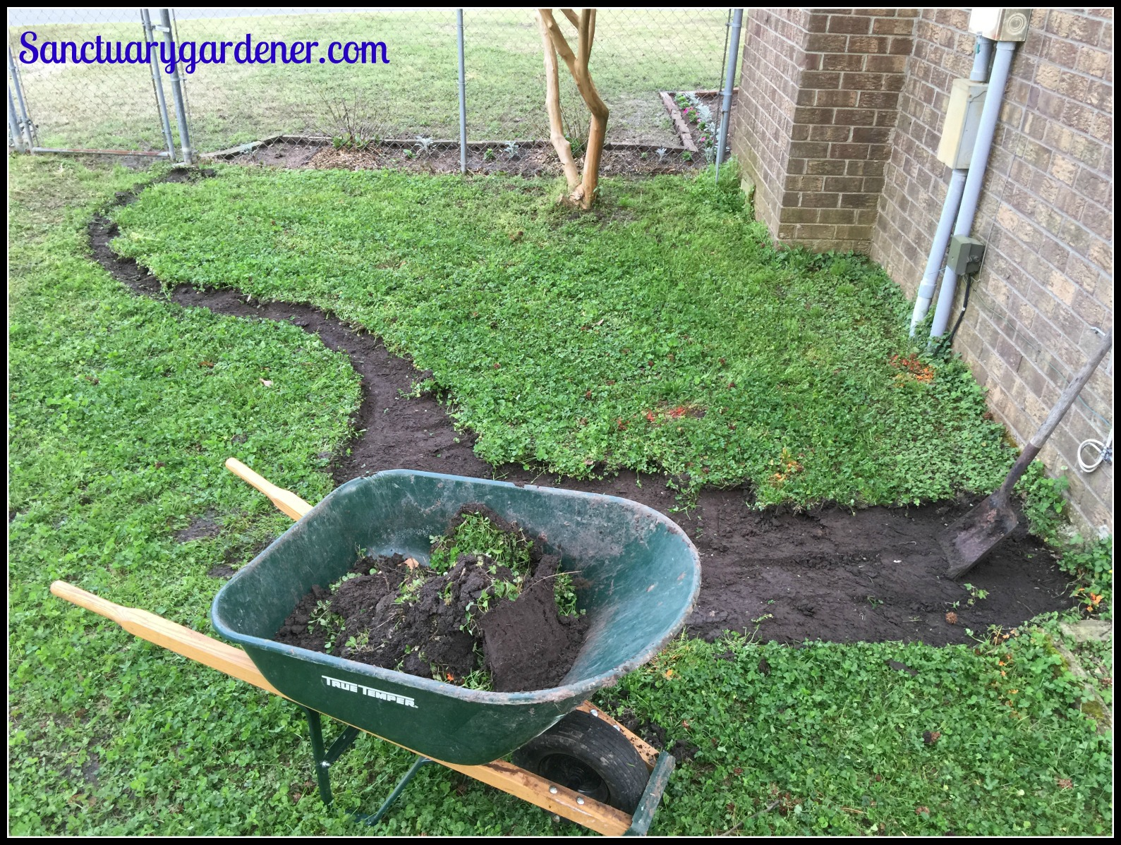 how to stop raccoons from digging up sod