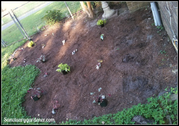Plants laid out for planting