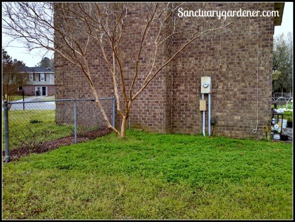 """Shade Garden spot """"before"""" digging"""