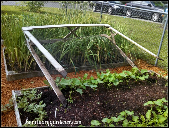Trellis blown over by Tropical Storm Ana