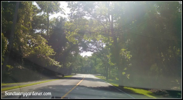 Tree-lined drive at Wild Dunes Resort