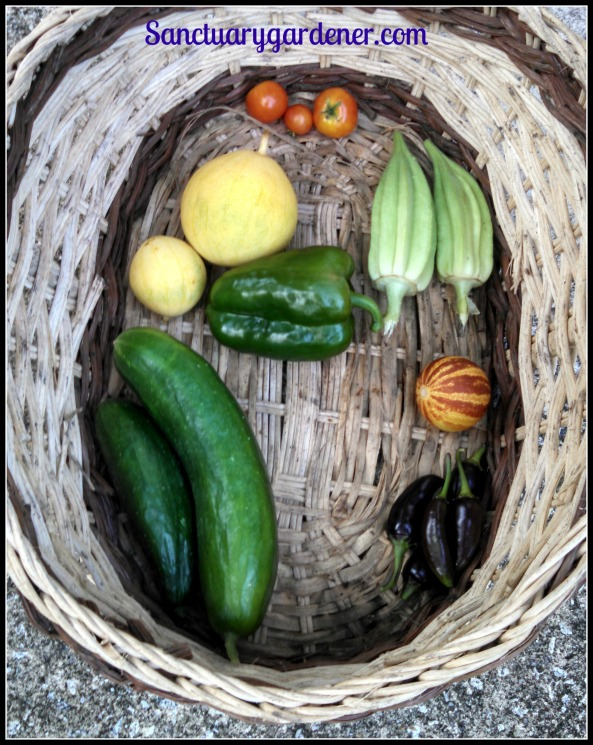 Tiny Tim tomatoes, Star of David okra, Rich Sweetness melon, Black Hungarian peppers, Beit Alpha cucumbers, Golden Midget watermelon. Center: Emerald Giant bell pepper
