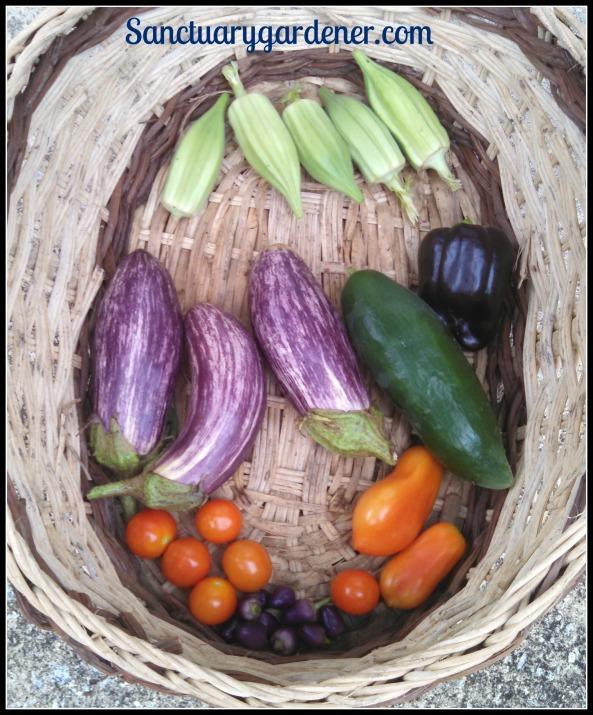 Star of David okra, Purple Beauty bell pepper, San Marzano tomatoes, Filius Blue peppers, Tiny Tim tomatoes, Edirne Striped eggplant