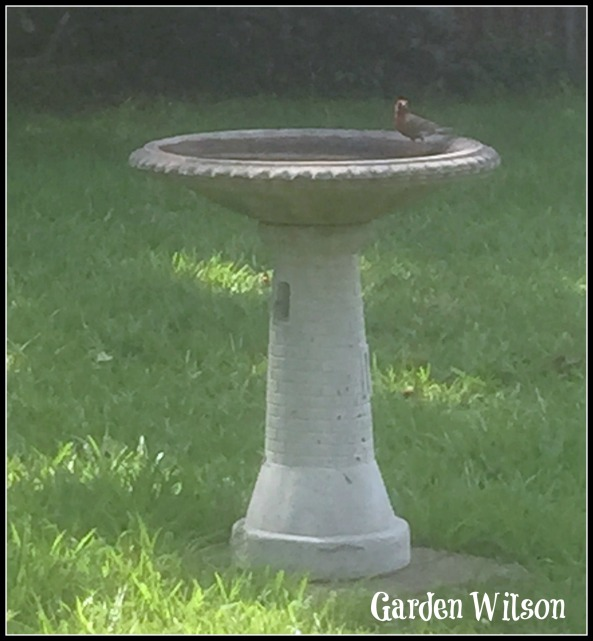House finch on my bird bath