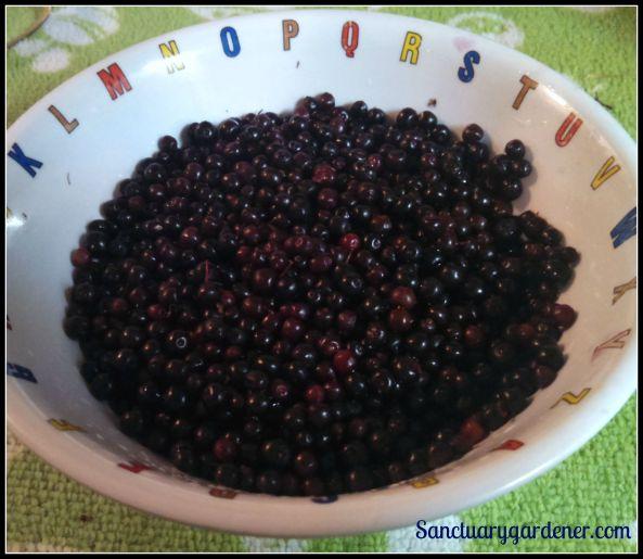 Elderberries in a bowl