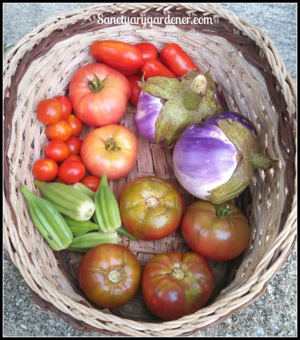 San Marzano tomatoes, Rosa Bianca eggplant, Black Krim tomatoes, Star of David okra, Riesentraube tomatoes, Mortgage Lifter tomatoes
