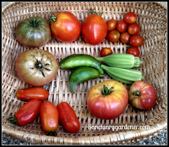 Amish Paste tomatoes, Riesentraube tomatoes, Star of David okra, Mortgage Lifter tomatoes, San Marzano tomatoes, Black Krim tomatoes. Center: Beit Alpha cucumbers
