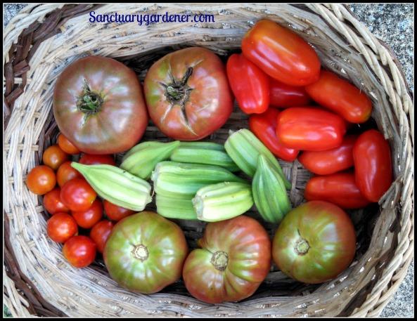 Tomatoes: Cherokee Purple, San Marzano, Black Krim, Riesentraube. Center: Star of David okra