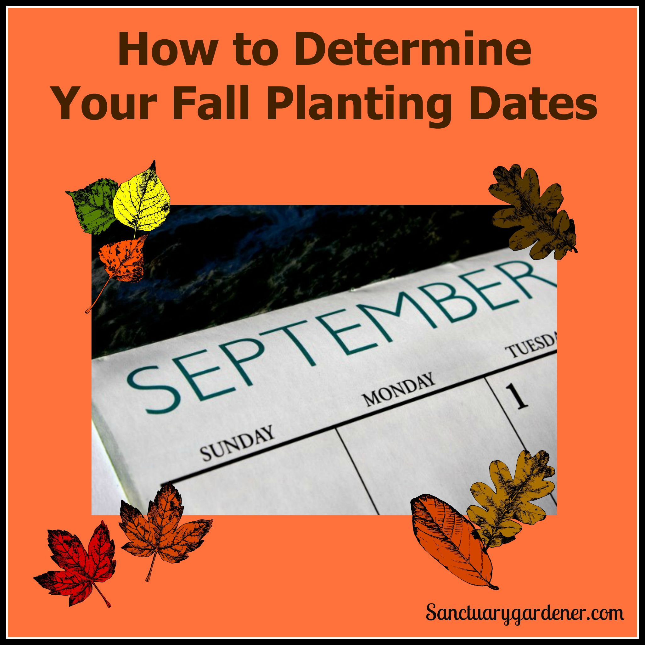 How To Determine Your Fall Planting Dates Sanctuary Gardener