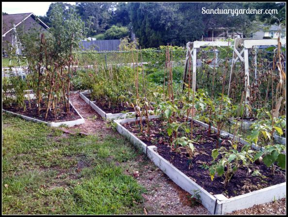 My side beds in August 2015 ~ closeup of the far end