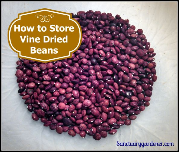 How to Store Vine Dried Beans pic