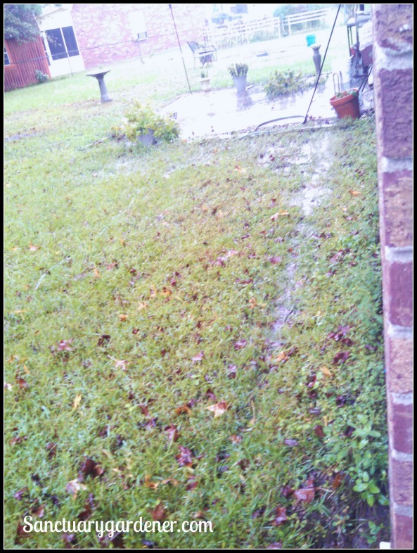 My soggy backyard on Saturday afternoon Oct 3, 2015