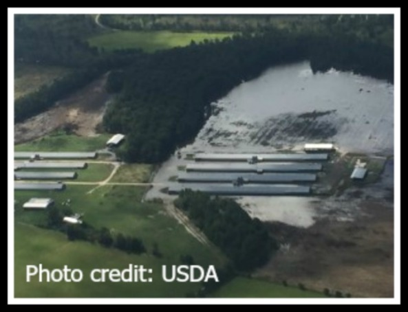 Flooded poultry farm in Clarendon County, South Carolina