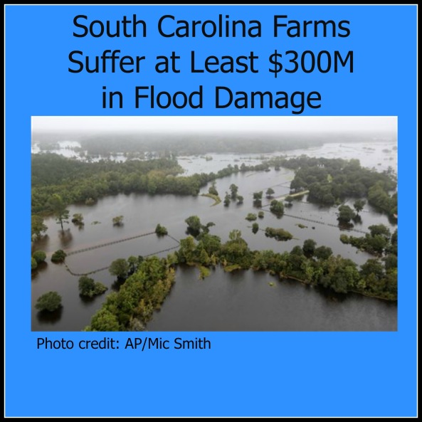 SC Farms Flood Damage Pic