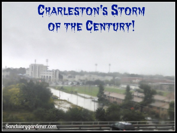 Storm of the century pic