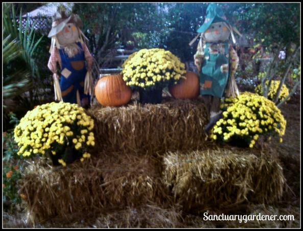 Fall arrangement in the garden area