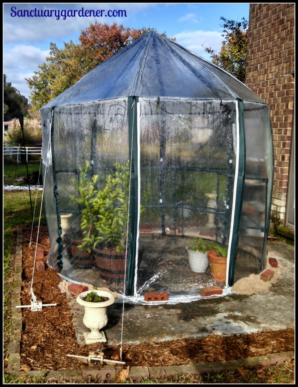 My new greenhouse - door side