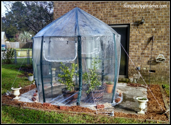My new greenhouse from the side