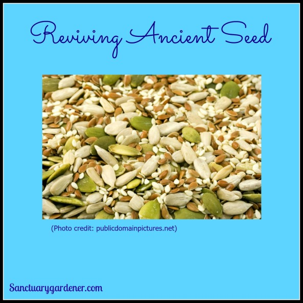 Reviving Ancient Seed pic